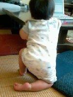 Taro200809101
