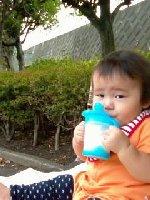 Taro200810104