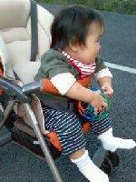 Taro200811031