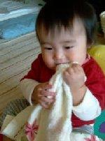 Taro200811071