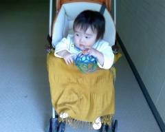 Taro200811111