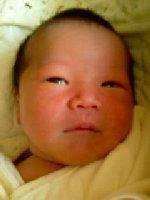 Taro200812011